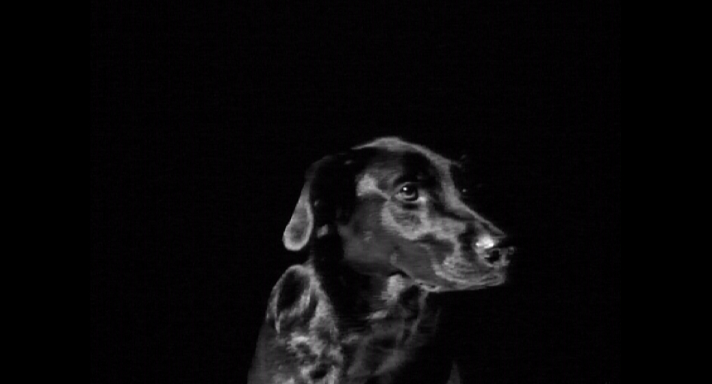Black Dog - Video installation - Mari Kretz