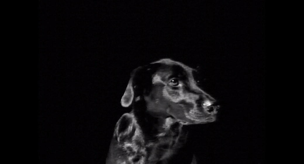 Black Dog - Video installation - Mari Kretz